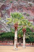 Playa De Las Teresitas, Canary Island Tenerife, Spain