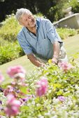 Senior Man In A Flower Garden