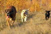 Hunde kommen mit einem Stock