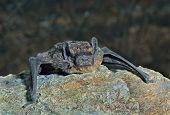Bat On Stone