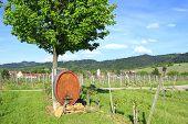 Wine barrel in the vineyards