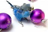 Parrot And Fir Tree New Year\'S Balls