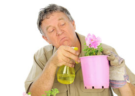 pic of fussy  - Fussy and careful middle aged gardener sprays a plant in a pot - JPG