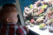 Child Watching Fishes