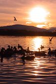 Sunset On Lake With Silhouette Of Birds And Mountains Colorful Landscape