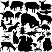 Detailed Vectoral Wild Animal Silhouettes poster