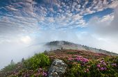 Southern Appalachian Blue Ridge Mountain Rhododendron and Fog