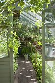 stock photo of greenhouse  - View of plants growing in greenhouse - JPG