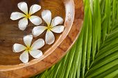 white frangipani in wooden bowl of and green palm