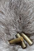 Cartridges On Fur