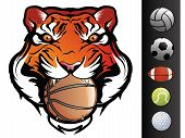 stock photo of tigers  - Tiger Sports Mascot with Ball in Mouth - JPG