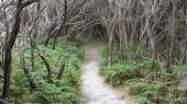 Tidal River Track