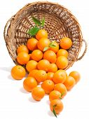 pic of clementine-orange  - Oranges with leaves in a basket is scattered on a on white background - JPG