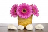 Pink Gerbera In Yellow Basket With Four White Rocks