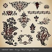 image of edelweiss  - collection of different vintage floral design elements - JPG