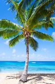 Coconut Palm Tree With Beach Chair In Hawaii
