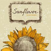 hand drawn background with sunflower