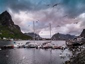 Seagulls flying over boat near moorage in Reine village, Norway