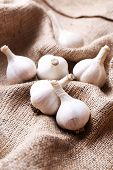 Fresh garlic on sackcloth background