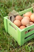 Eggs in wooden box on grass outdoors