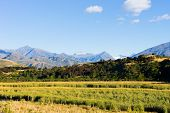 Natural landscape of New Zealand alps and field