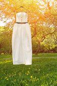 Wedding dress hanging on a tree