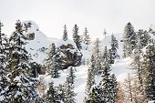 Coniferous Forest On Snow Slope In Dolomites