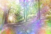 Fantasy rainbow bokeh woodland