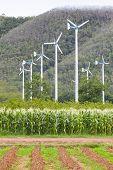 .landscape Of Eco Windmill Turbines Fan In Agriculture Farm