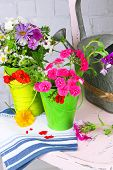 Bouquet of colorful flowers in decorative buckets, on chair, on light wall background