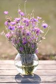 Beautiful wild flowers in vase in field
