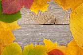 Autumn leaves on wood texture background