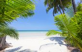Palm leaf and tropical beach. Koh Chang, Thailand