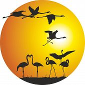 stock photo of flamingo  - Illustration of a circular arc of countries - JPG