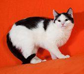 White With Black Spots Kitten Standing On Orange