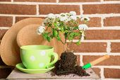 foto of plant pot  - Flowers in wooden box - JPG