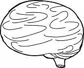 Outline Brain Sketch