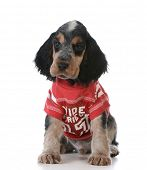 cute puppy - english cocker spaniel puppy wearing football jersey sitting on white background