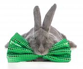 giant flemish bunny wearing big green bowtie on white background