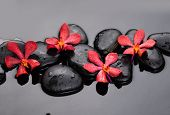 pic of stone-therapy  - Red orchid with therapy stones - JPG