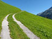 Mountain road through the meadow