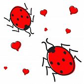 Ladybugs In Love Isolated