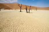 picture of orange-tree  - Dead trees in the Sossusvlei desert Namibia - JPG