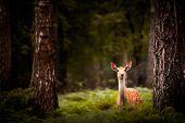 pic of deer rack  - Whitetail Deer Buck standing in a woods - JPG