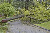 pic of tree lined street  - A neighborhood road is blocked by a large oak tree and downed power lines after a spring storm