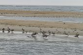 Wildlife Of The Outer Banks