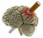 Human brain with Cigarette (clipping path included)