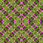 Pattern Of Clover Flower In The Field