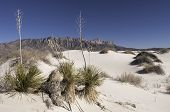 image of guadalupe  - Salt basin dunes are made of Gypsum grains which are bright - JPG