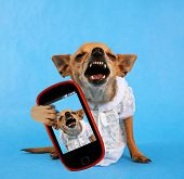 a tiny laughing chihuahua dressed up in a tiny dress taking a selfie with a camera phone